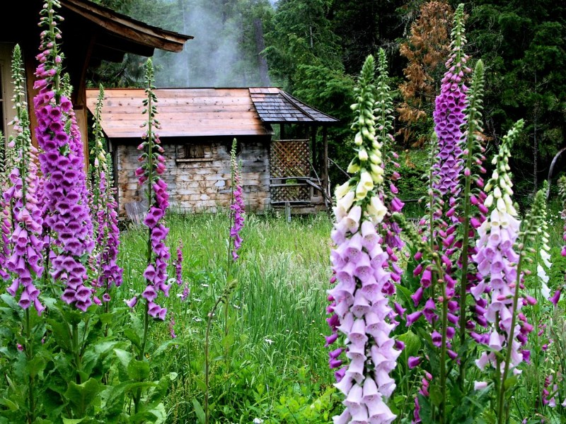 Breitenbush hot springs retreat and conference center oregon usa oregon breitenbush hotsprings flowers o mightylinksfo
